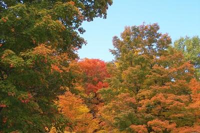 grrr tree meed day fall 10.15.14