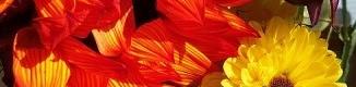 orange yellw - 2