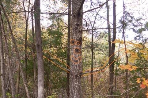 smiley tree oct 2013