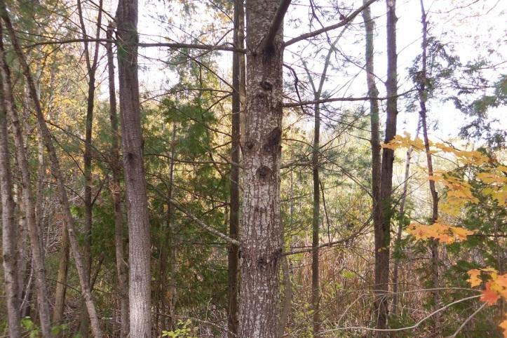 smiley tree october 2013