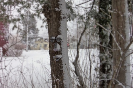 snowed on tree face