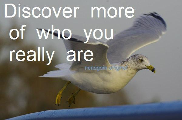 discover u