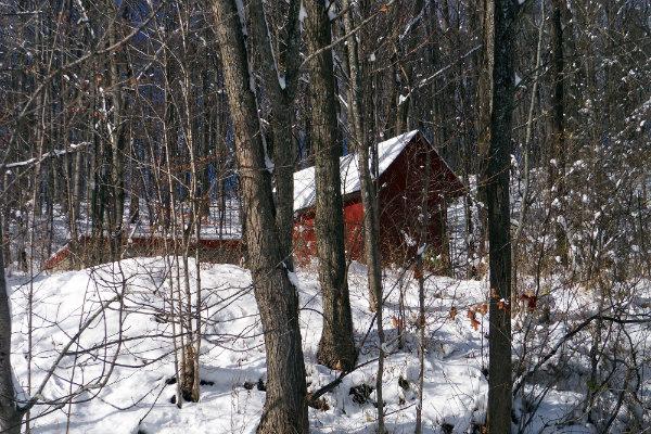 129 red winter.JPG