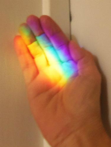 caught rainbow.JPG