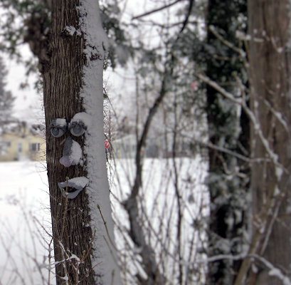 snowed on tree face.JPG