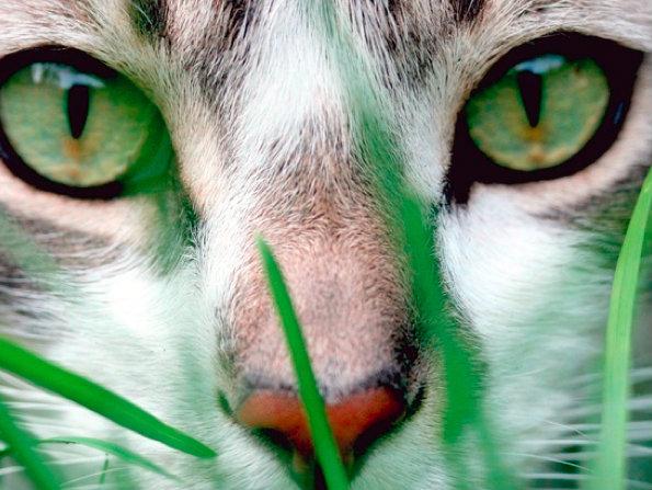 cat grass.jpg