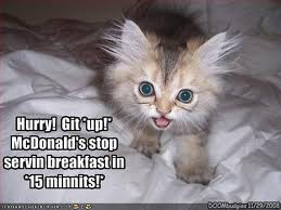 morning cat mcd.jpg