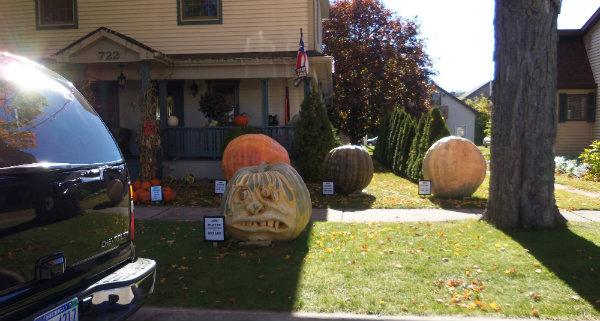1 083 pumpkin