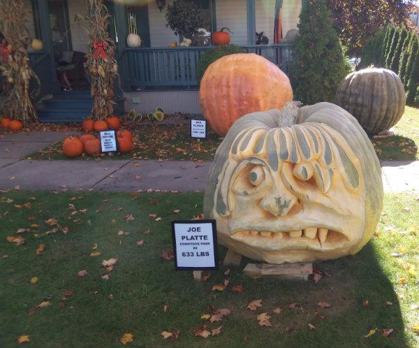 2 084 pumpkin