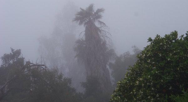 foggy 100_8780