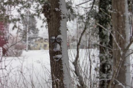 snowed-on-tree-face