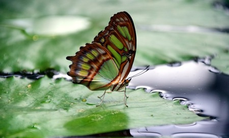 multi colored butterfly lit upon water lilies