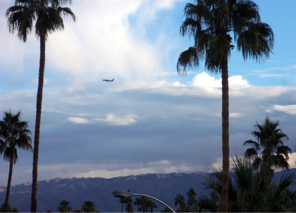 landscape of palm trees with two main ones up front with a jet between the two, taking off in the distance