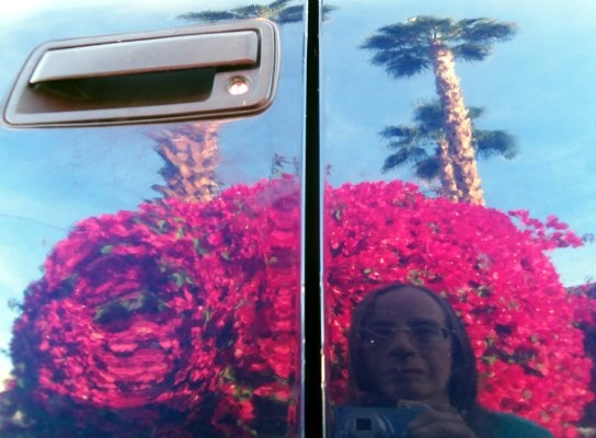 a reflection of myself as I kneel beside the car. The door handle blocks part of the palm tree on the left, leaving the palm of the right, standing tall. Behind me is a crimson color bush which blends well with the blue sky.