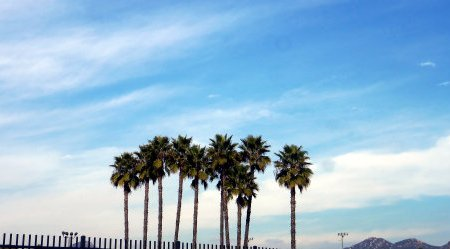 a group of palm trees with a cloudy blue background