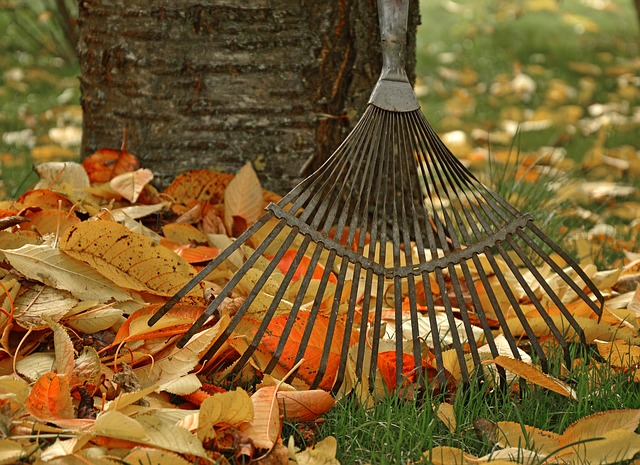 close up of the tines of a rake, resting against a tree, with a small pile of raked leaves between rake and trunk.