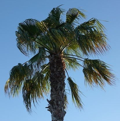palm-3860894_640.jpg