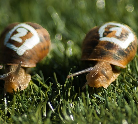 two snails, side by side in the grass. One has a 2 painted on its shell, the other, a 1. It is a snail race