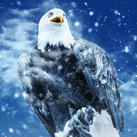 an eagle in winter snow with a blue sky