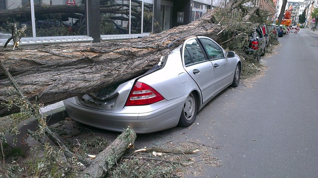 a large fallen tree in the city, lays across the tops of several cars, crushing in their roofs