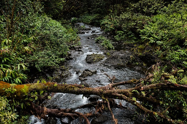a tree laying across a creek, providing an easy crossing for others.