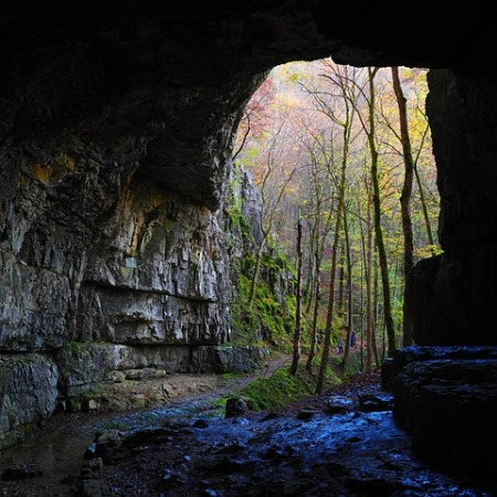 looking out, from inside a cave, at a forest