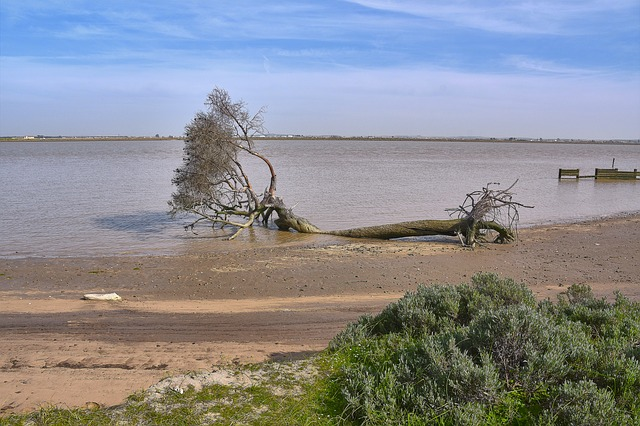 An uprooted tree with its branches in the lake, its roots still on shore