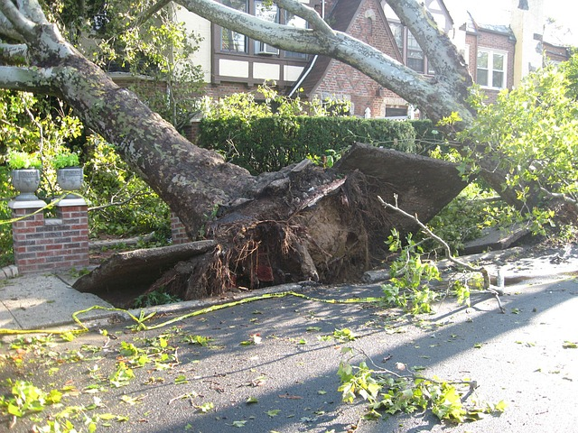 trees between street and houses, uprooted and fell towards the homes (perhaps from an earthquake)