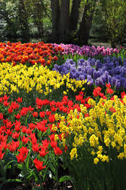a bright and colorful field of red, orange, yellow, blue, lavendar flowers