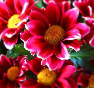 bright pink white and dark red flower with yellow center