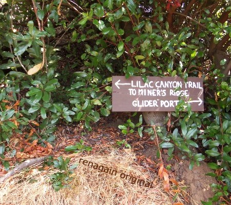 Trail sign: Lilac Canyon Trail. To miner's ridge, with an arrow pointing left. Glider point, with an arrow pointing right.