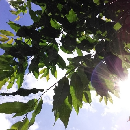 looking up at the branch of a tree with the sun peeking through the leaves