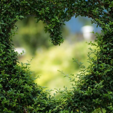 heart opening within a green hedge